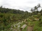 川に洗濯に インドネシアの生活